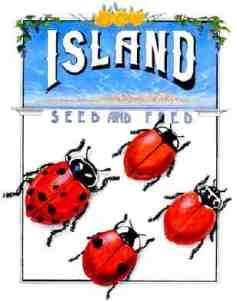 lady bugs (2)